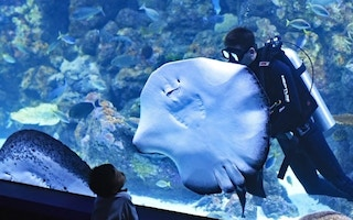 plus grand aquarium du monde