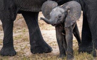 éléphant au zoo